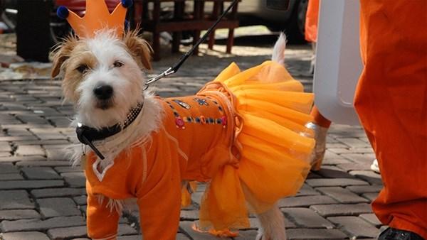 FF Oranje outfit dog NC 700x397